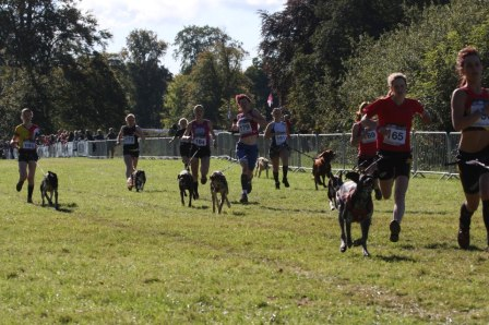 Is your dog ready for the stress of a start line? - Photo courtesy of tzruns.com