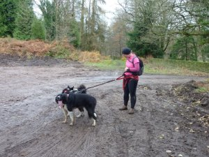 There's nothing quite like getting out in the countryside with your dogs for a run!